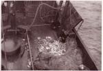 Dek na binnenhalen en sorteren van vangst