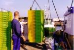 Laden lege viskisten te Zeebrugge, author: Onbekend