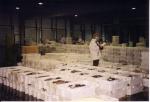 Loten vis worden gesorteerd om in de veilklok in te voeren