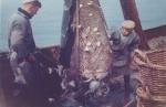Jan De Voogt en Maurice Calcoen met vangst