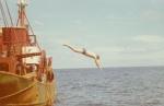 Jan De Voogt duikt in zee vanaf de O.227 (Bouwjaar 1931)