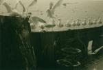 Zeemeeuwen eten visingewanden.