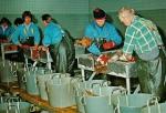 Vis sorteren in vismijn Hanstholm