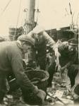 Vissers sorteren vangst
