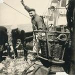 Vissers met vangst aan boord van de Z.562 Luc (bouwjaar 1956)
