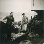 Vangst kuisen aan boord van de Z.402 Atlantis (Bouwjaar 1963), author: Onbekend