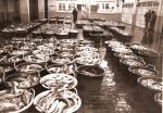 Vangst in de vismijn