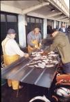 Vangst uitstallen voor verkoop