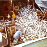 Vissers op een dek vol vangst