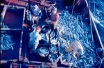 Vissers aan dek met grote vangst haaien