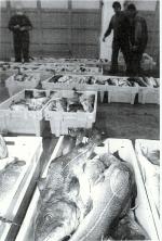 Vismijn Nieuwpoort