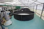 MRS - IAQ Testing Center Fish