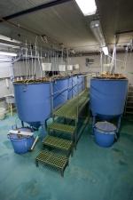 MRS 2 - IAQ Testing Center Fish