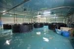 MRS 3 - IAQ Testing Center Fish