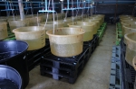 SCRD - IAQ Testing Center Shrimp