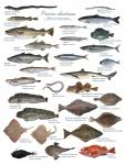 poissons atlantiques