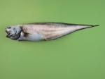 Monomitopus
