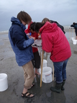 Collecting experimental organisms on the beach