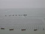 Aquaculture Shandong