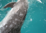 Lesions on a dolphin skin