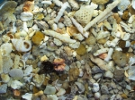 Biogenic calcareous structures: shells, coral fragments