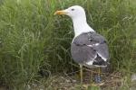 Sensornetwerk voor grote vogels