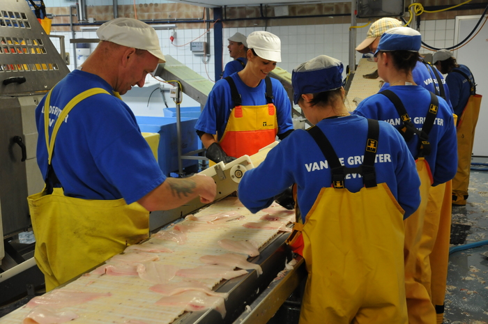 process of fish in Arnemuiden