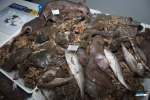 Fish with a white flag are eaten, all the other animals are bycatch