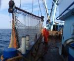 Het vissersschip 2510 Dennis vist met sleepnetten, ook boomkornetten genoemd, op dermersale vissen