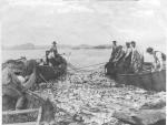 Bloeiende kabeljauwvisserij voor de Oost-Canadese kusten vóór 1960