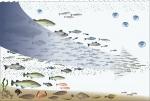 De voedselpiramide afvissen in de Noordzee