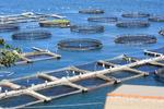 Offshore visboerderijen in La Spezia (IT)