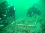 Underwater picture 1
