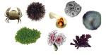 Enkele kalkvormende organismen