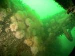 Underwater picture 3