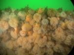 Underwater picture 4