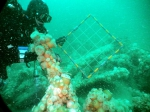 Underwater picture 8