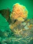 Underwater image12