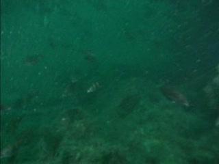 Fish near Kilmore wreck