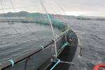 VLIZ website: Visserij en aquacultuur: Aquacultuur