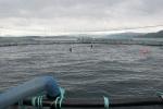 Zalmkwekerij. Omgeving Bergen, Noorwegen (2013.05.22)