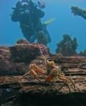 Belgica onder water (7)