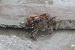 Harde substraten kust