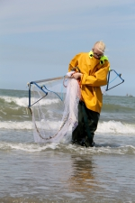 Voorbereiding strandobservatienetwek