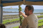 In Lestre, Francis is sharing the love of his oyster farm with tourists in the summer.  Saint-Vaast exhibition, France.