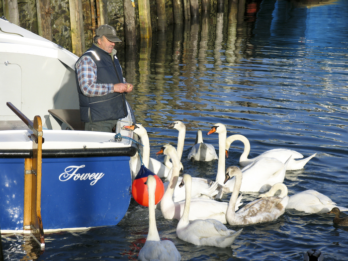 Ferryman feeding the swans