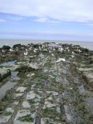 Strandobservatienetwerk