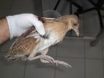Kraanvogelachtigen