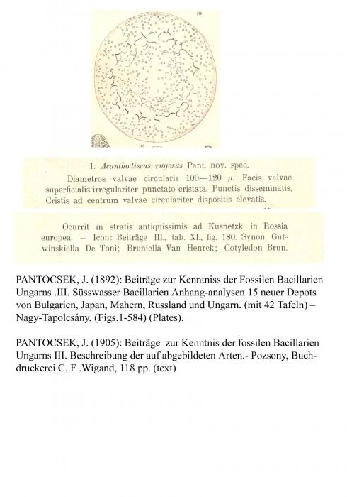 Acanthodiscus rugosus Pant., 1892
