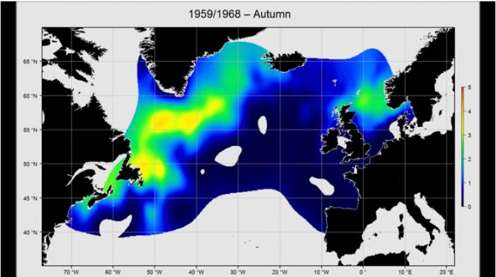 Gridded abundance maps of most common Atlantic Copepod species